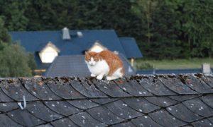 Katze auf Dachfirst